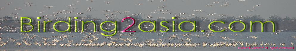Birding 2 asia. Expert guided birding tours & free info on birdwatching in Asia.