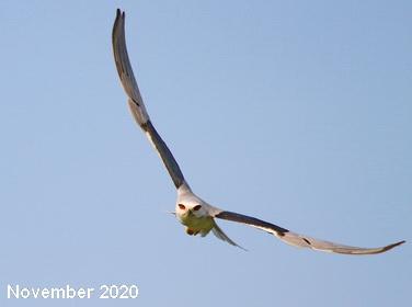 Birding Belgium