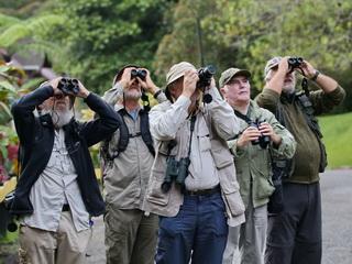 Birding on Borneo