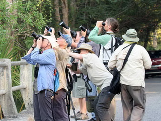 Birding the Lesser Sundas