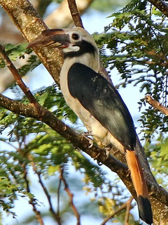Bird watching in the P...