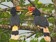 Bird tour Malaysia.