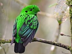 Whitehead's