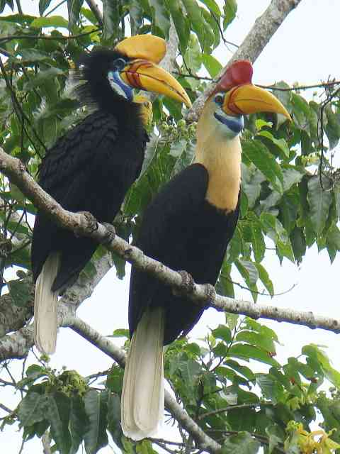 birding2asiacom expert guided birding tours on sulawesi